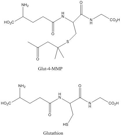 glut4MMP